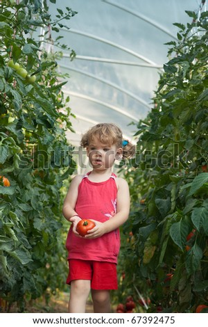 girls picked tomatoes - stock photo