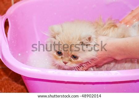 Giving cute kitten a bath in water - stock photo