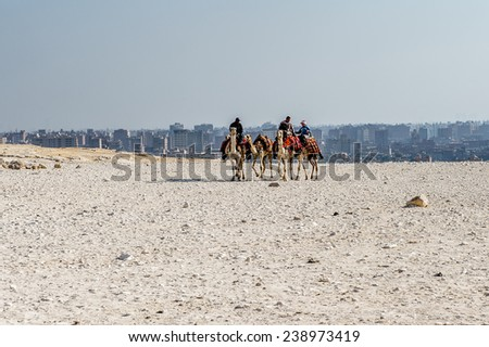 GIZA, EGYPT - NOV 23, 2014: Unidentified Egyptian people ride camels at Giza Necropolis, Egypt. UNESCO World Heritage - stock photo