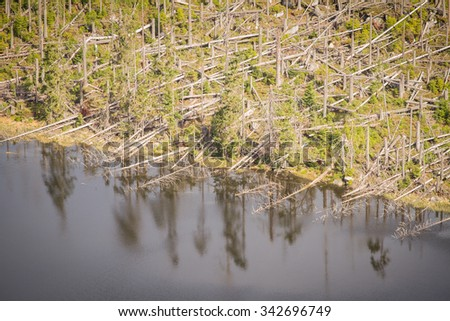 glacial lake Plesne surrounded by dead forest devastated by hurricane - natural park Bohemian forest - detail of dead trees fallen into water - stock photo