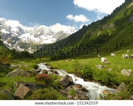 Glacial stream in the Alps - stock photo