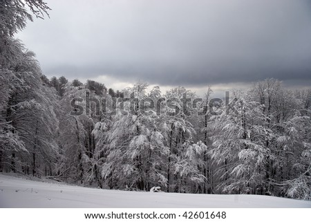 Glade and forest covered with snow - stock photo