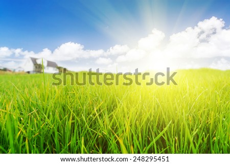 Glade green grass under the blue sky. Sunset. The house in the background. - stock photo