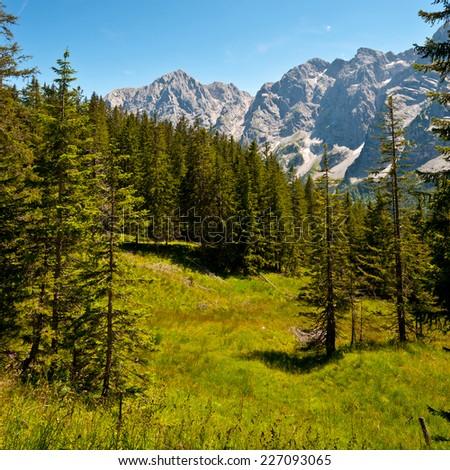Glade in Bavarian Alps, Germany - stock photo