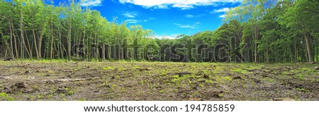 glade in felling of the forest - stock photo