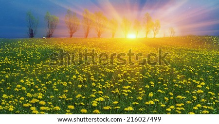 Glade Spring and summer flowers-dandelions under a clear sky with bright clean clouds  - stock photo