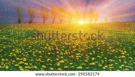 Glade Spring and summer flowers-dandelions under a clear sky with bright clean clouds pleases viewer saturated colors and the freshness of a new day. After the storm and rain especially bright foliage - stock photo