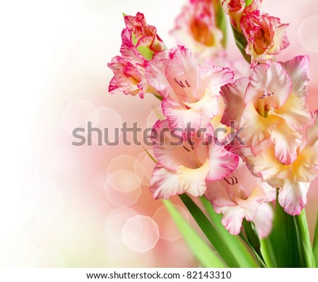 Gladiolus Autumn Flower Border Design - stock photo
