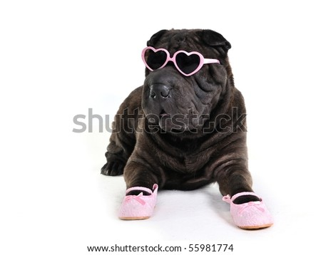 Glamour Dog in Glasses and Shoes - stock photo