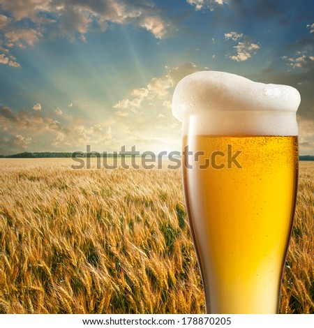 Glass of beer against wheat feild and sunset - stock photo