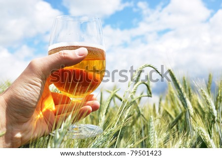 Glass of beer in the hand against barley ears - stock photo