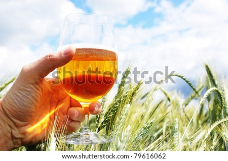 Glass of beer in the hand against barley ears