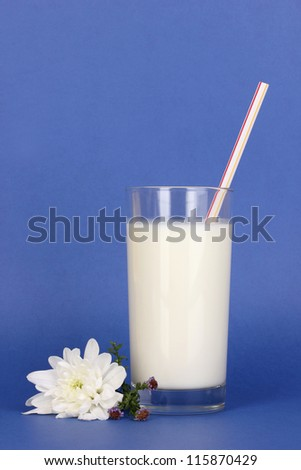 Glass of fresh new milk with white flower on blue background
