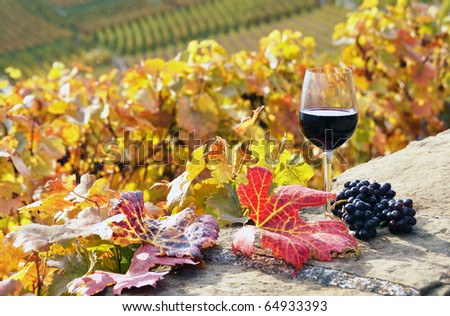 Glass of red wine and bunch of grapes. Lavaux region, Switzerland - stock photo