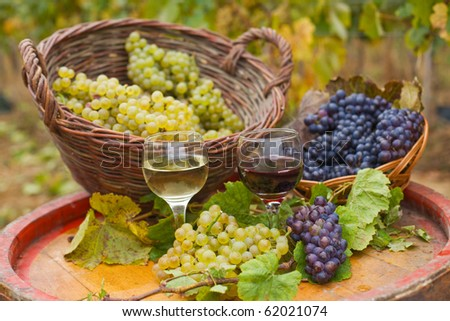 Glass of red wine and white wine with fresh grapes in the vineyard