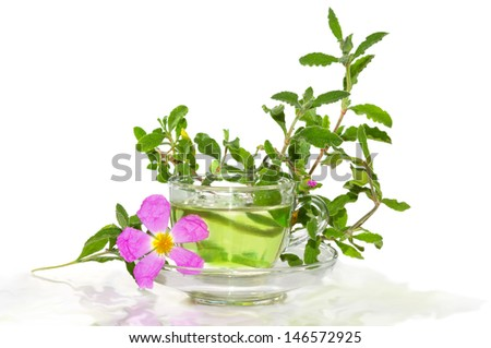 Glass of refreshing tea or infusion made from the Rockrose or Cistus albidus with a single pink flower and branch of leaves off the shrub alongside, on white - stock photo