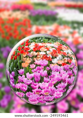 Glass sphere with various tulips in flowers field - stock photo