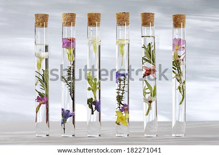glass test tubes with different flowers and cork plugs - stock photo
