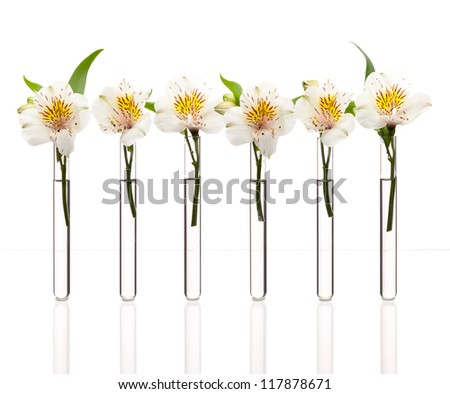 Glass test tubes with white flowers standing in line isolated on white, can be concept of similarity - stock photo