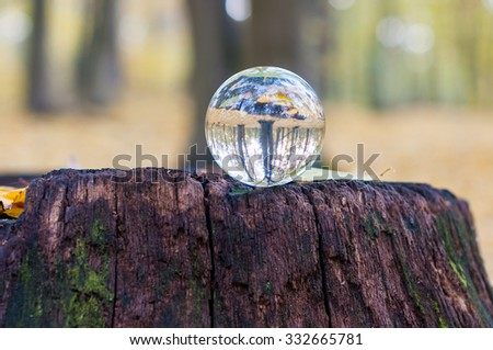 Glass transparent ball on the stamp with autumn forest on background. Soft focus. With empty space for text. - stock photo
