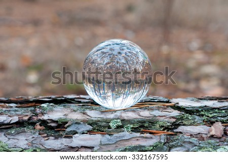 Glass transparent ball on tree trunk with autumn forest On background. Soft focus. With empty space for text. - stock photo
