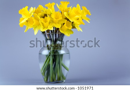 Glass vase full of daffodil flowers. - stock photo