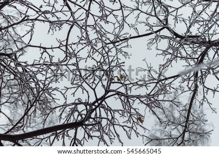 Glaze ice on the branches in a forest