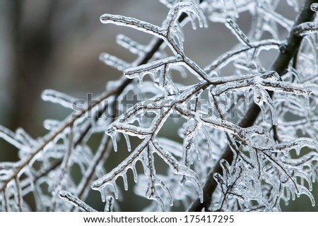Ice Storm Damage Stock Images Royalty Free Images