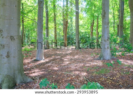 Glimpse into deciduous forest with sunlight filtering through the foliage - stock photo