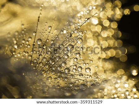 Glittering dewdrops - golden abstract background - stock photo
