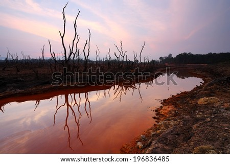 Global warming concept dead tree on dry and arid land - stock photo