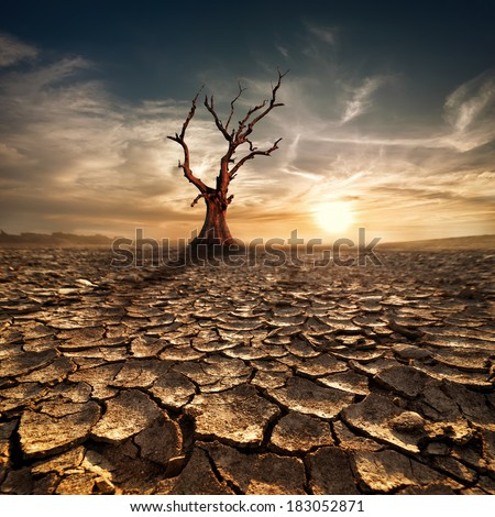 Global warming concept. Lonely dead tree under dramatic evening sunset sky at drought cracked desert landscape - stock photo