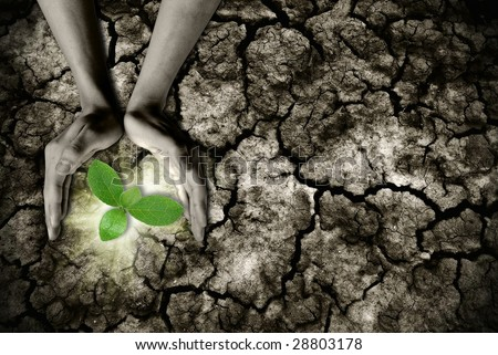 global warming theme human hands defending green grass sprout rising from rainless cracked ground - stock photo