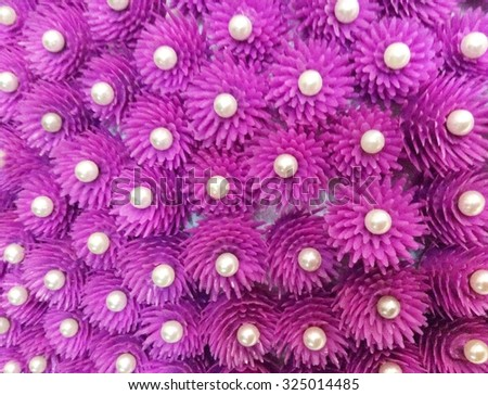 Globe Amaranth or Bachelor Button flower background
