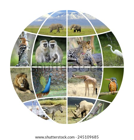 Globe design with photographs animals. Conceptual background - stock photo