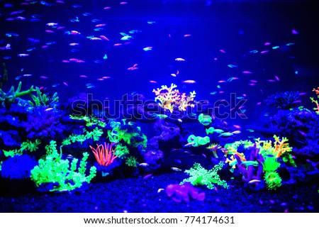 glofish danio rerio fluorescent fish aquarium stock photo