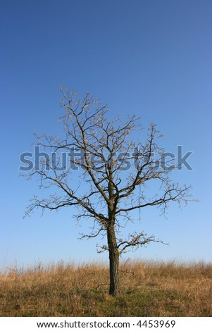 Gloomy, dead tree with blue sky in a yellow field - stock photo