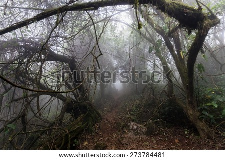 Gloomy natural tunnel in a foggy tropical forest in early morning - stock photo
