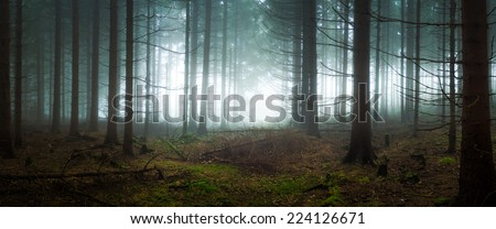 Gloomy spruce forest filled with fog - stock photo