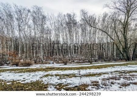 gloomy winter landscape - stock photo