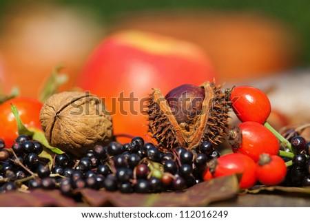 glowing autumn fruits - stock photo