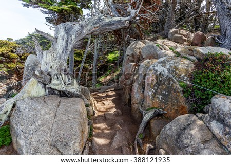 Gnarly, twisted, crooked, Cypress trees with red lichen & Spanish moss growing on the branches, surrounding the rocky steep and dangerous Cypress Grove Trail at Point Lobos State Natural Reserve. - stock photo