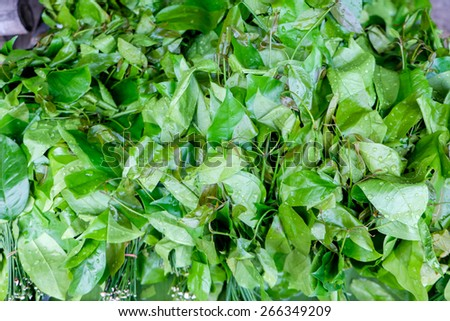 gnetum gnemon vegetable in south of thailand market - stock photo