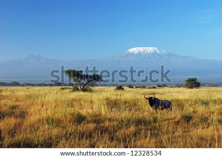 Gnu resting in savannah with Kilimanjaro in the background - stock photo