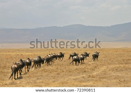 gnus in single line
