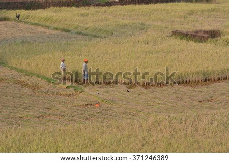 Goa, India - October 23, 2015 - Family members working with their hands on fields in Goa, India.