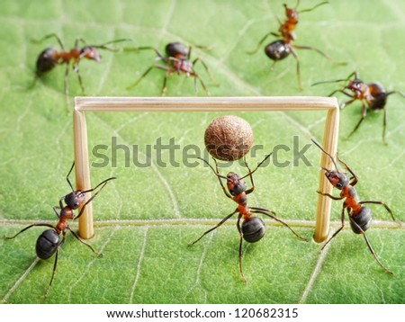 goal keeper in gate, team of ants play soccer - stock photo