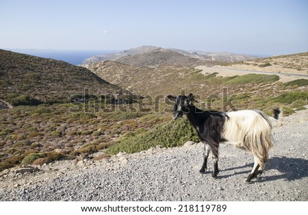 Goat in greek landscape, Crete