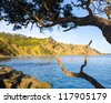 Goat Island Marine Reserve Leigh North Island New Zealand - stock photo