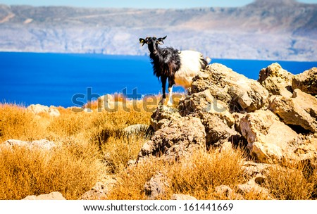 Goat Kri Kri, Crete against blue mediterranean water - stock photo